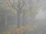 Utca ködben