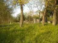 SZsidó temeto 2014 május