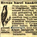 Kanárik eladók 1903 307. szám